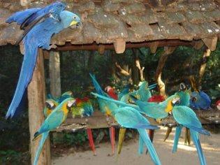 turismo foz do iguacu